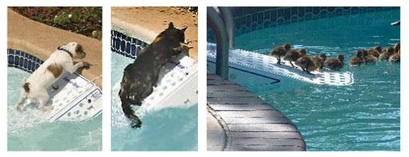 rampe-sauvetage-animaux.jpg